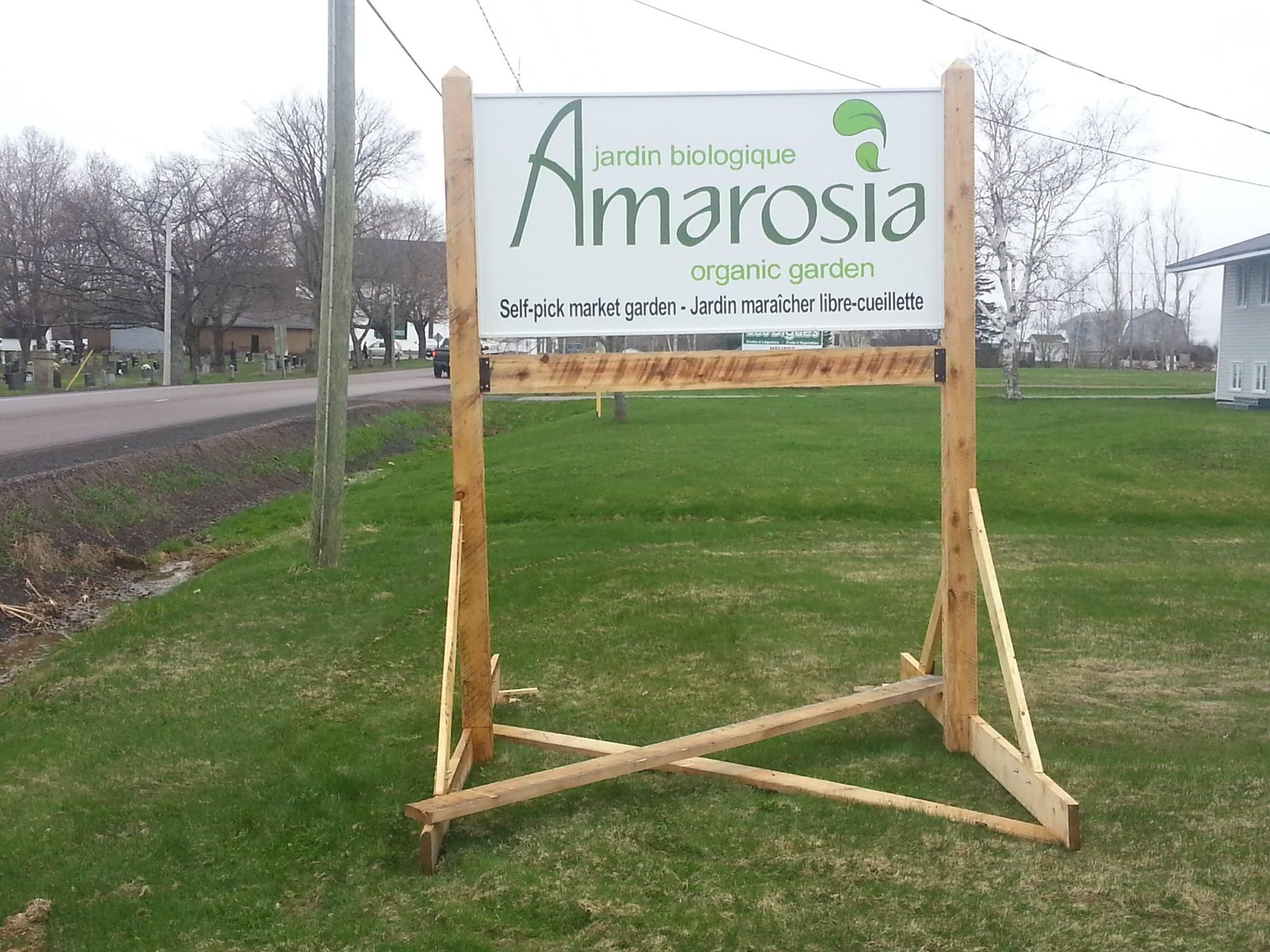 Amarosia1