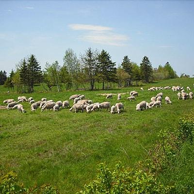 ShepherdsGarden